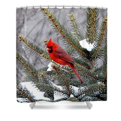 Shower Curtain featuring the photograph Sleeping Cardinal by Brenda Bostic