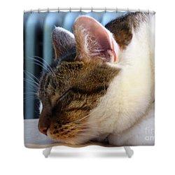Sleeping Cat Shower Curtain