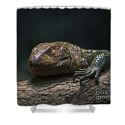 Sleeping Dragon Shower Curtain