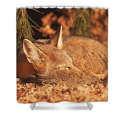 Sleeping Fox  Shower Curtain