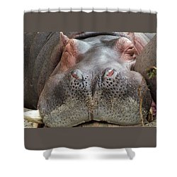 Sleeping Hippo Shower Curtain by Tiffany Vest