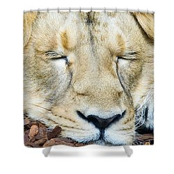 Shower Curtain featuring the photograph Sleeping Lion by Colin Rayner