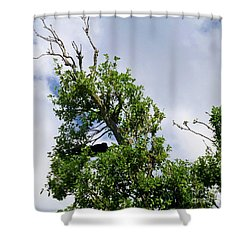 Shower Curtain featuring the photograph Sleeping Monkey 2 by Francesca Mackenney
