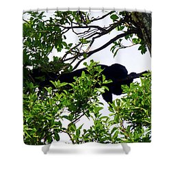 Shower Curtain featuring the photograph Sleeping Monkey by Francesca Mackenney