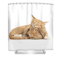 Sleeping On Bun Shower Curtain