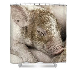 Sleeping Piglet Shower Curtain
