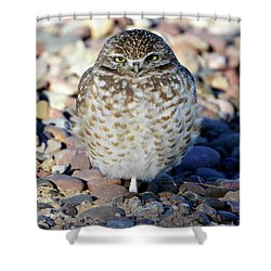Sleepy Burrowing Owl Shower Curtain