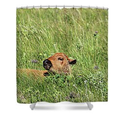 Sleepy Calf Shower Curtain by Alyce Taylor