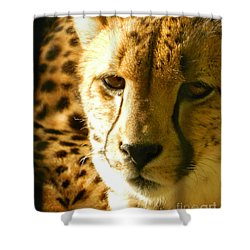 Sleepy Cheetah Cub Shower Curtain by Emmy Marie Vickers