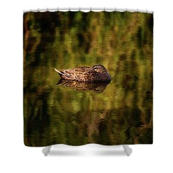 Sleepy Duck, Yanchep National Park Shower Curtain by Dave Catley