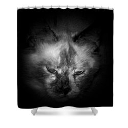 Shower Curtain featuring the photograph Sleepy Head by Betty Northcutt