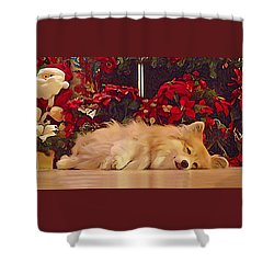 Shower Curtain featuring the photograph Sleepy Holiday Corgi Surrounded By Poinsettias. by Kathy Kelly