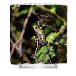 Sleepy Hummingbird Shower Curtain