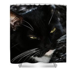 Sleepy Kitty Shower Curtain