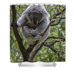 Sleepy Koala Shower Curtain by Sheila Smart Fine Art Photography