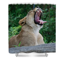 Shower Curtain featuring the photograph Sleepy Lion by Richard Bryce and Family