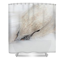 Waking Up Shower Curtain