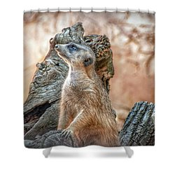 Shower Curtain featuring the photograph Slender-tailed Meerkat by Hanny Heim