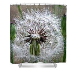 Slight Breeze Shower Curtain