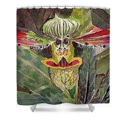 Shower Curtain featuring the painting Slipper Foot Aladdin by Mindy Newman
