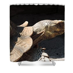 Slow But Sure Shower Curtain by Teresa Schomig
