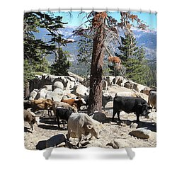 Slow Is Fast Shower Curtain