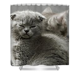 Slumbering Cat Shower Curtain