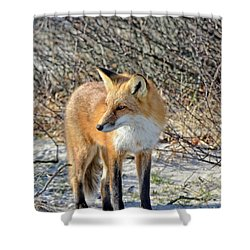 Sly Little Fox Shower Curtain by Sami Martin