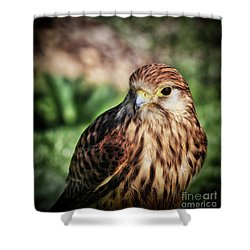 Small Bird Close-up Shower Curtain by Stephan Grixti