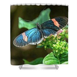Small Black Postman Butterfly Shower Curtain