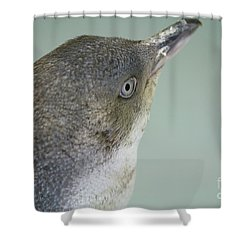 Small Blue Penguin  Shower Curtain