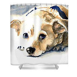 Small Dog With Tan Short Hair  Shower Curtain