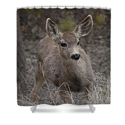 Small Fawn In Tombstone Shower Curtain by Colleen Cornelius