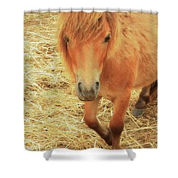 Small Horse Large Beauty Shower Curtain by Karol Livote