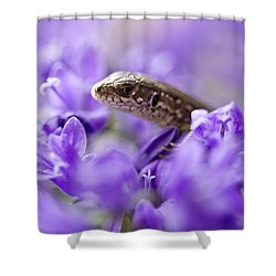 Small Lizard Shower Curtain by Jaroslaw Blaminsky
