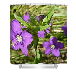 Shower Curtain featuring the photograph Small Mauve Flowers by Jean Bernard Roussilhe