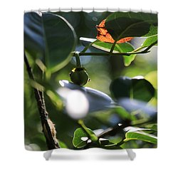 Small Nature's Beauty Shower Curtain by Christopher L Thomley