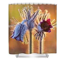 Shower Curtain featuring the photograph Small Pasque Flower, Pulsatilla Pratensis Nigricans by Davor Zerjav