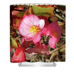 Small Pink Flowers Of Summer Shower Curtain