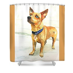Small Short Hair Brown Dog Shower Curtain