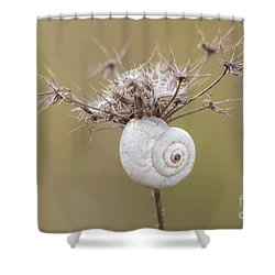 Small Snail Shell Hanging From Plant Shower Curtain