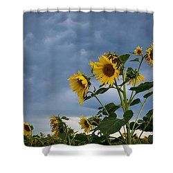 Small Sunflowers Shower Curtain