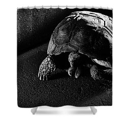 Shower Curtain featuring the photograph Small Turtle Exploring The Surroundings by Eduardo Jose Accorinti