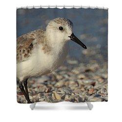 Smallest Bird Shower Curtain