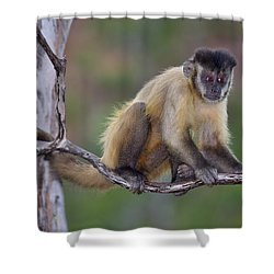 Shower Curtain featuring the photograph Smarty Pants by Tony Beck