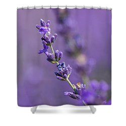 Smell The Lavender Shower Curtain