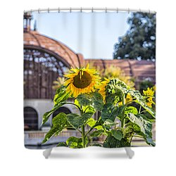 Sunflower Smile Shower Curtain by Joseph S Giacalone