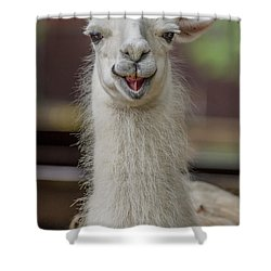 Smiling Alpaca Shower Curtain