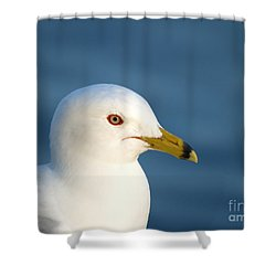 Smiling Seagull Shower Curtain