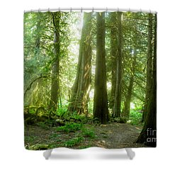 Smokey Forest Shower Curtain
